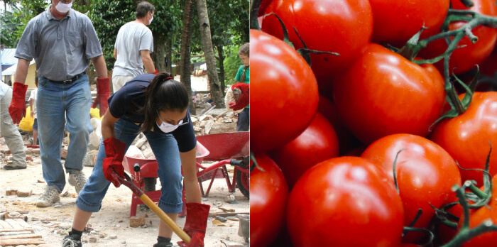 People working and Tomatos